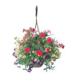 hanging-basket-calypso-wholesale