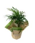4-5-in-areca-palm-wholesale