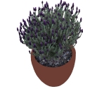 masson-farms-outdoor-lavender
