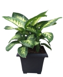 dief-tropic-snow-10-in-foliage